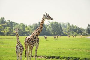 10 Tips For An Amazing Day At African Lion Safari