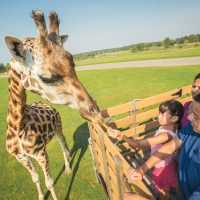 African Lion Safari Adventure Package-Best Western Brantford