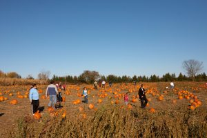 Fall Farm Trips for Foodies