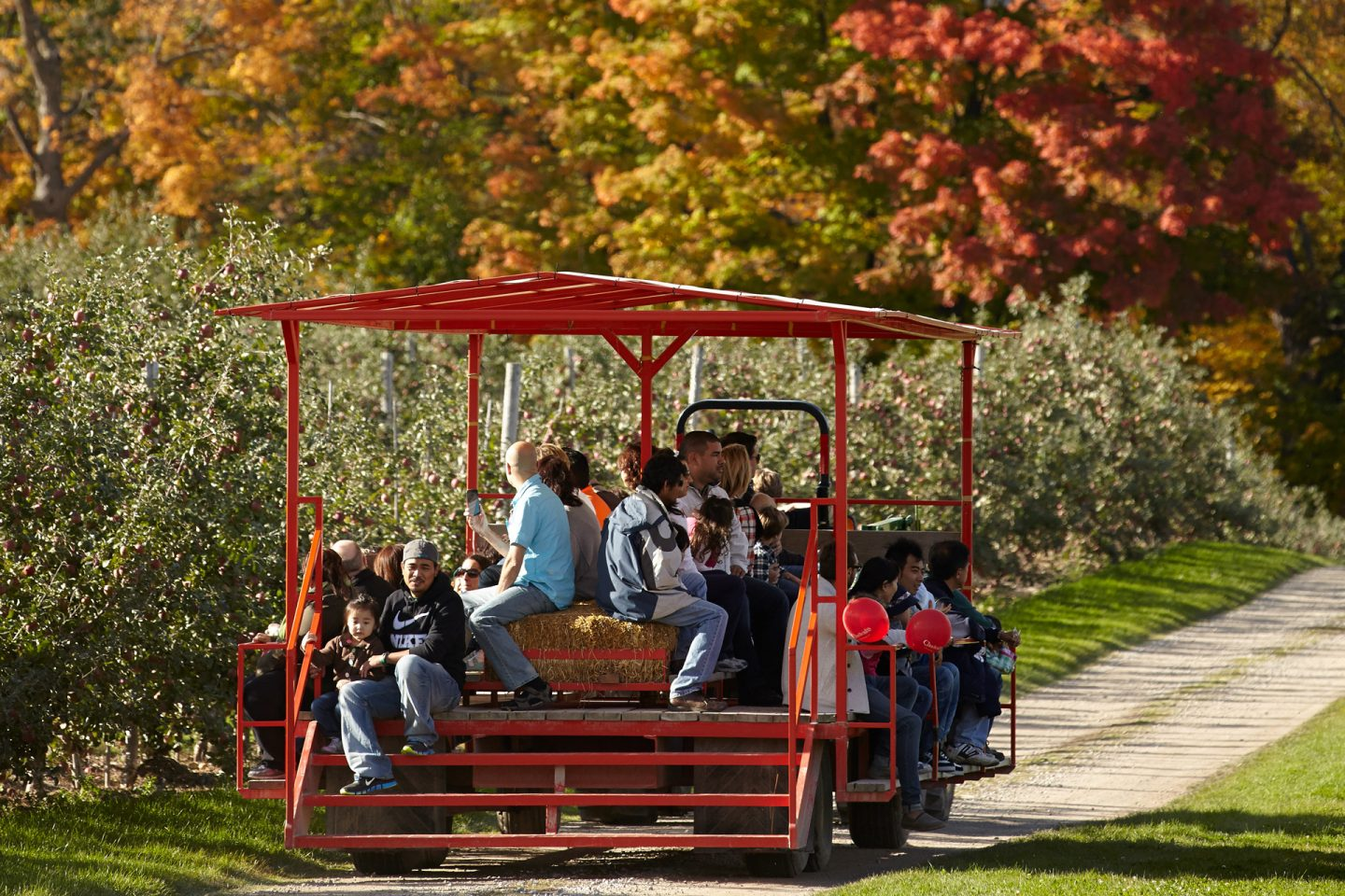 Save on a Family of 4 Season Pass at Chudleighs Farm  Copy