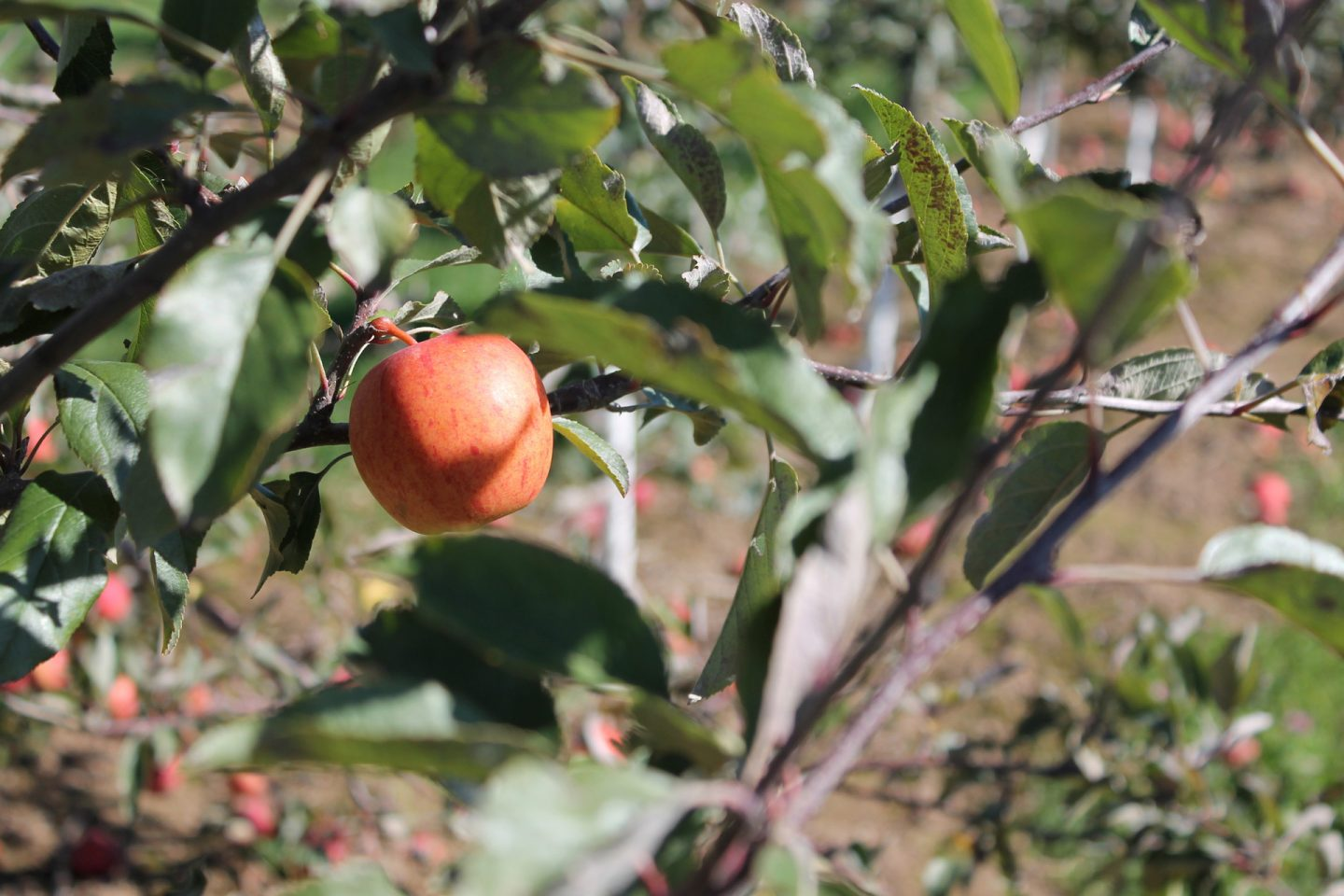 Brantview Apples and Cider Farm