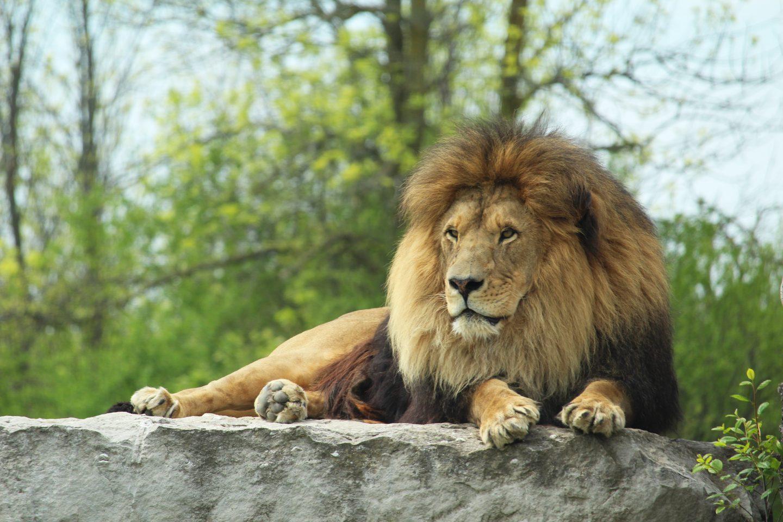 0aaaf7ae African Lion Safari - Hamilton Halton Brant