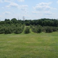 Myers Apple Farm