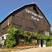 Save on a Season Pass for 4 at Springridge Farms