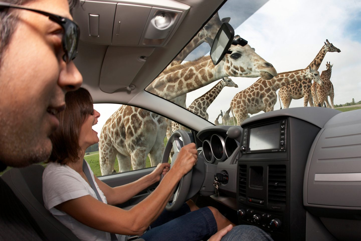 African Lion Safari – Drive Thru Game Reserve