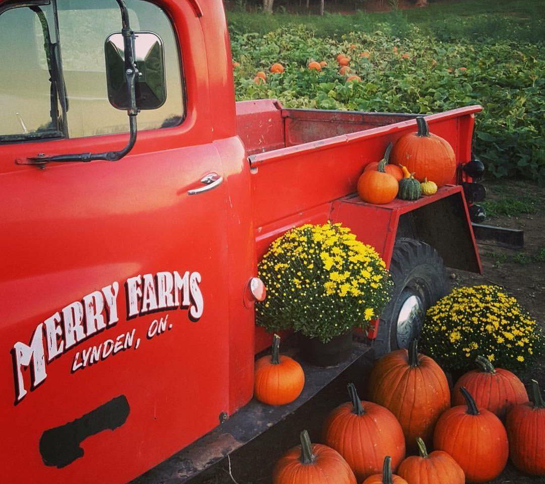 Merry Farms Inc