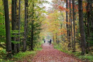 Where to Fall for Autumn Colours