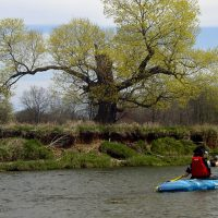Upper Nith River Experience