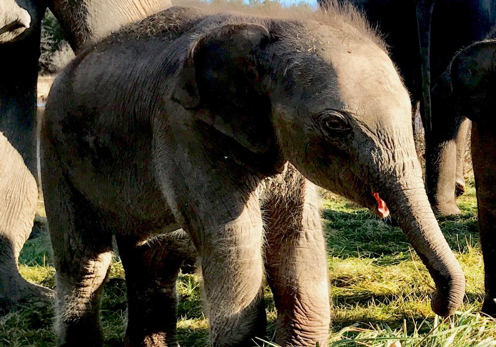 African Lion Safari – $2 OFF Regular admission