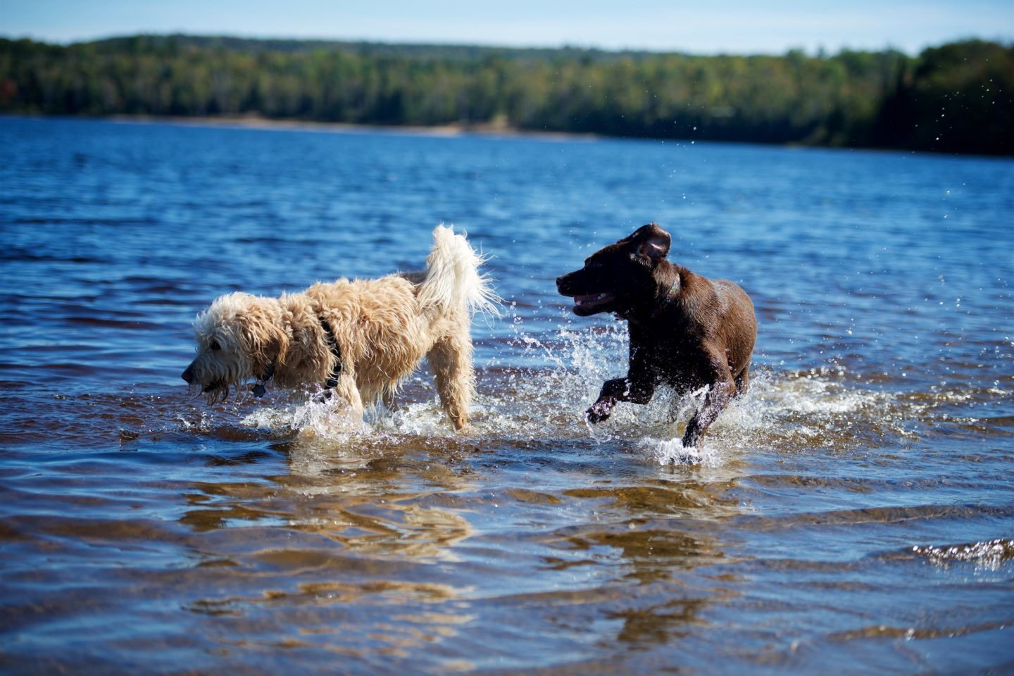 Doggy Dip and Mutt Marketplace