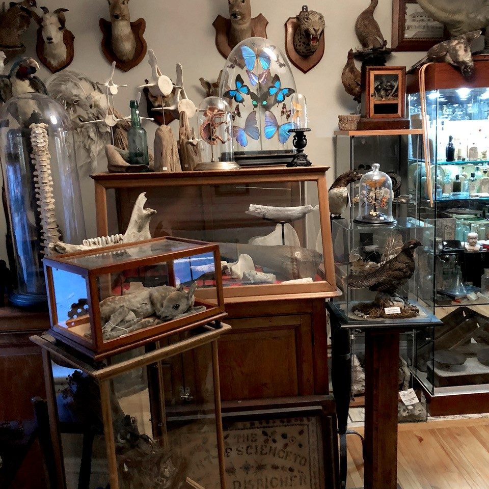 Cabinet of Curiosities and Otherwise Needful Things