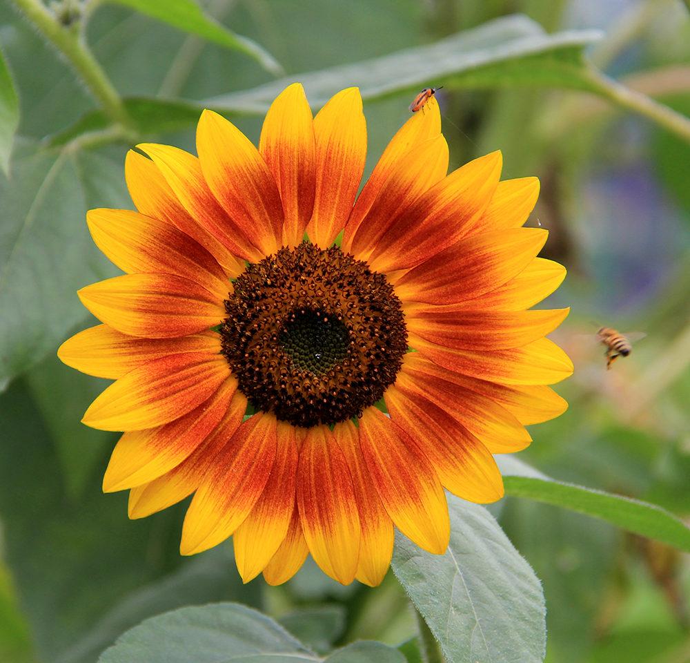 Brantwood Farms' Flower Field Experience