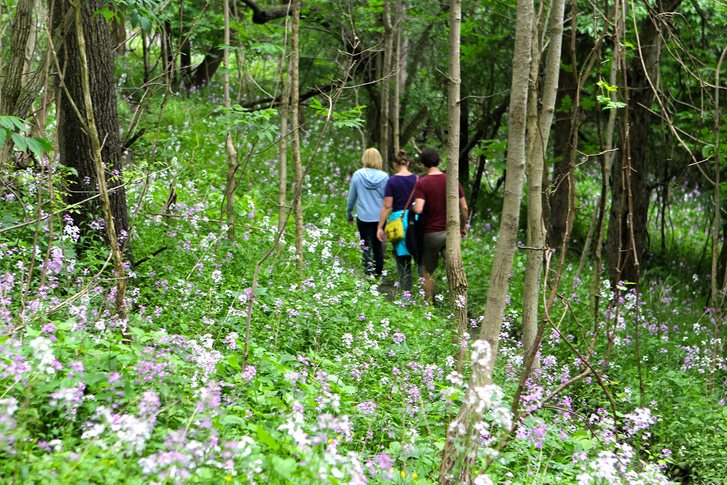Nith River Forest Hiking Experience