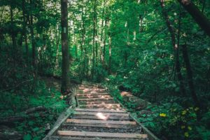 Forest Bathing 101: <small>4 Reasons To Take A Woodsy Walk</small>