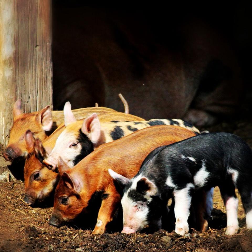 Farm Crawl Hamilton
